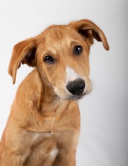 Close-up de cachorro vira-lata