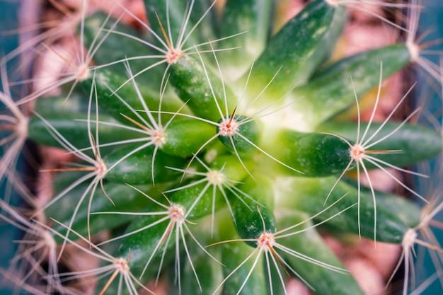 Close-up de cacto em forma com espinhos longos