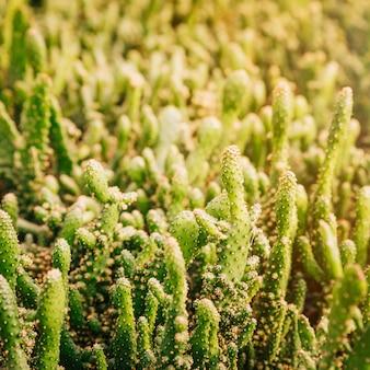 Close-up, de, cacto verde, planta, em, luz solar