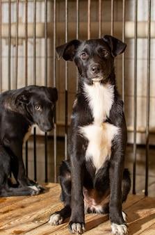Close-up de cães sentados em uma gaiola em um abrigo de animais
