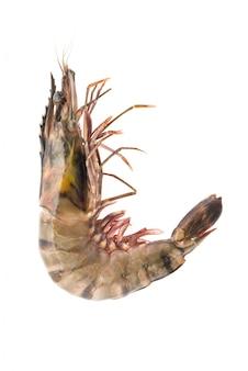 Close-up de camarão inteiro