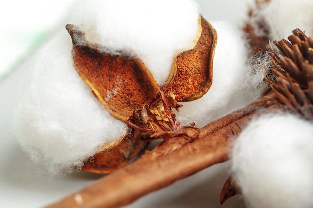 Close-up de cápsulas de algodão maduro na filial
