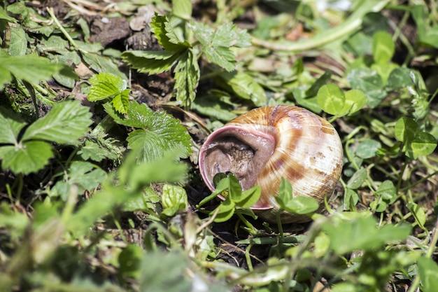 Close-up, de, caracol, em, natureza, recuado, em, a, concha caracol