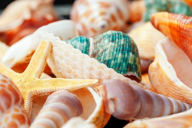 Close-up de conchas do mar