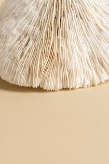 Close up de coral natural em superfície bege