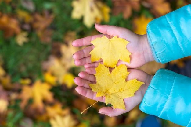 Close-up de duas folhas de bordo amarelo outono nas mãos de uma criança