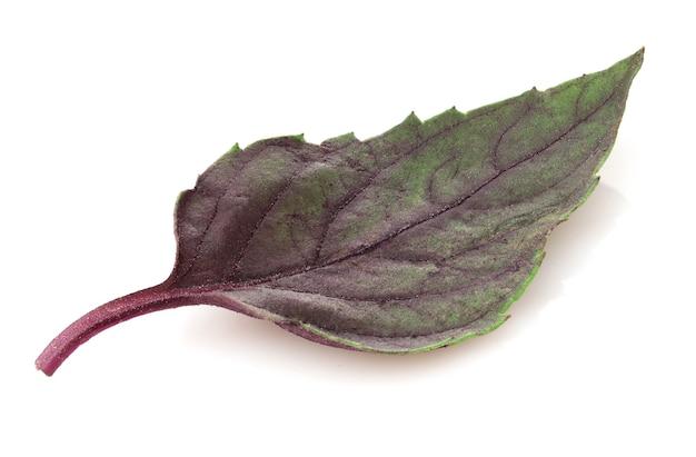 Close up de erva fresca de manjericão roxo escuro, isolada no branco