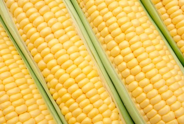 Close up de espiga de milho