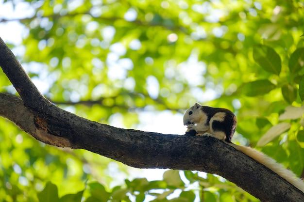 Close-up de esquilo na árvore