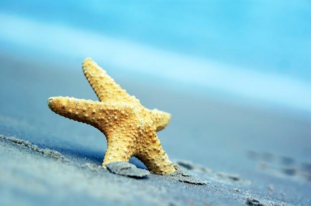 Close-up de estrelas do mar com fundo borrado