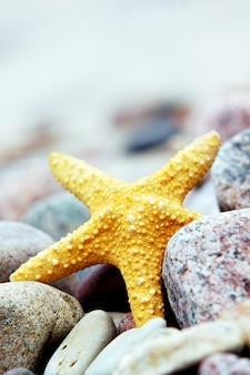 Close-up de estrelas do mar em seixos
