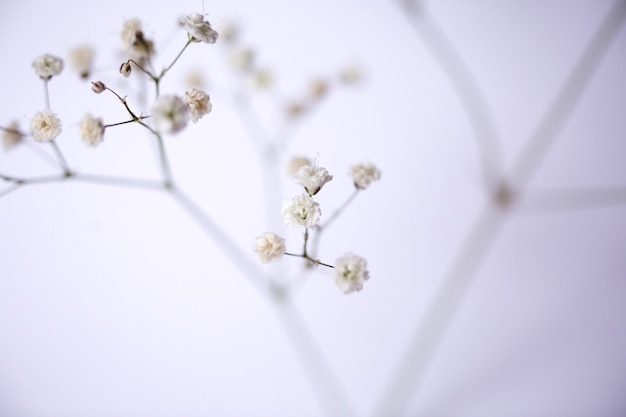 Close-up de flor branca.