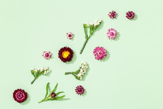 Close up de flores coloridas secas pequenas flores em fundo verde florido natural
