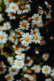 Close-up de flores coloridas