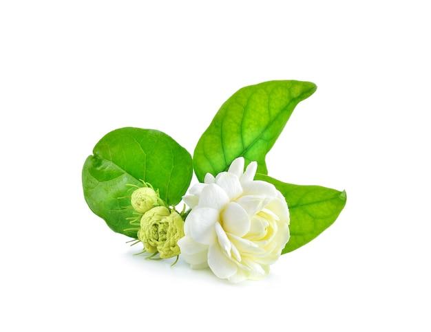 Close-up de flores de jasmim