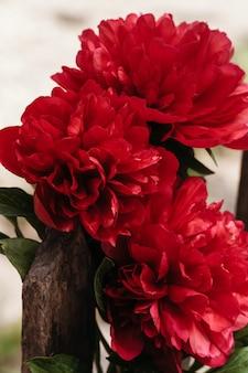 Close-up de flores peônias. flor de peônia bonita para catálogo ou loja online. conceito de loja de flores. lindo buquê recém-cortado.