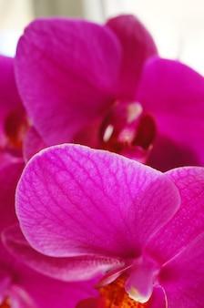 Close up de flores roxas