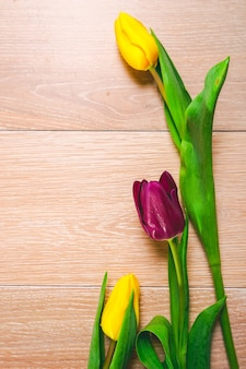 Close-up de flores, tulipas amarelas e roxas, fundo, natureza