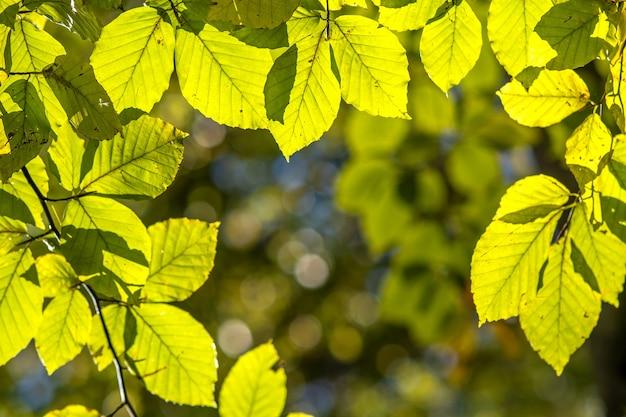 Close-up de folhas amarelas vibrantes brilhantes em galhos de árvore no parque de outono