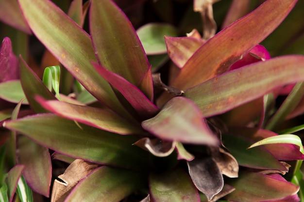 Close-up de folhas com detalhes roxos