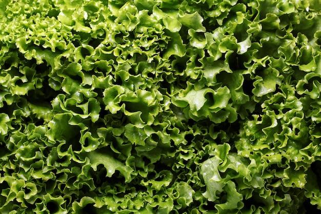 Close-up de folhas de alface