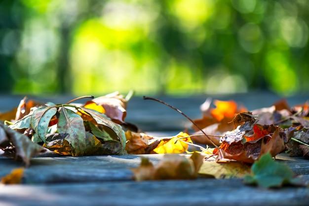 Close-up de folhas de outono no chão