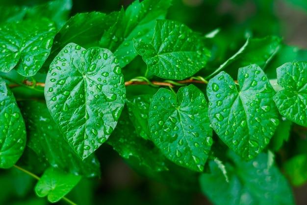 Close up de folhas verdes com fundo natural de gotas de água