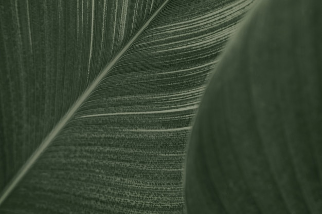Close up de folhas verdes de flores de charuto