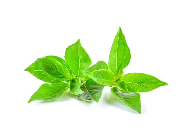 Close-up de folhas verdes de manjericão