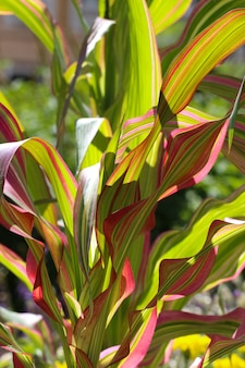 Close up de folhas verdes de milho com listras roxas em contra-luz contra o céu