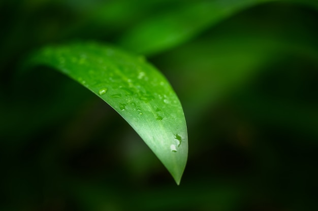 Close-up de folhas verdes e molhadas de monocots no jardim