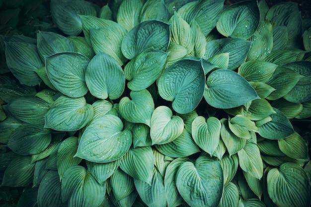 Close-up de folhas verdes. folha tropical. vista do topo