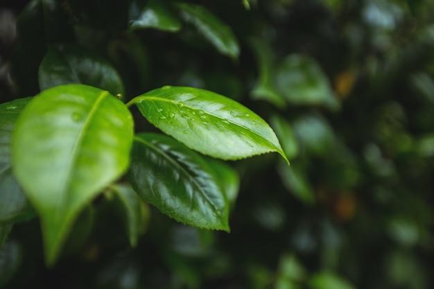 Close-up de folhas verdes
