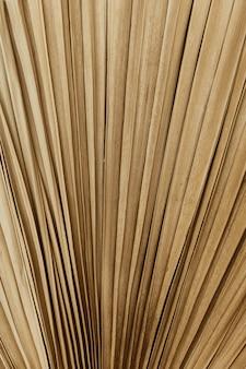Close up de fundo de padrão isolado de folha de palmeira tropical seca.