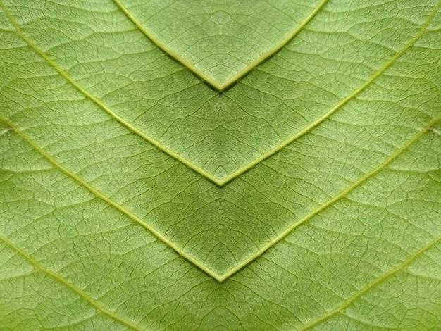 Close-up de fundo de textura de folha verde