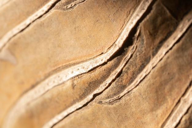Close-up de fundo orgânico de elemento natural