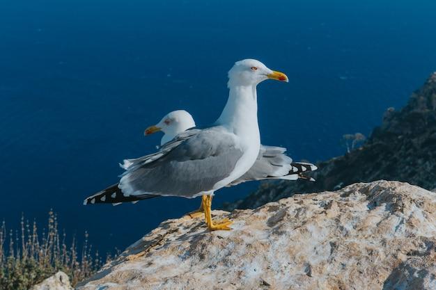 Close-up de gaivotas empoleiradas em um penhasco com o mar ao fundo em calp, espanha