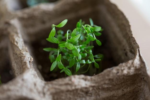 Close-up de grama fresca verde primavera, plantio de culturas e cereais
