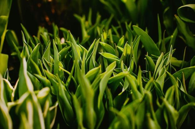 Close-up de grama verde. fundo