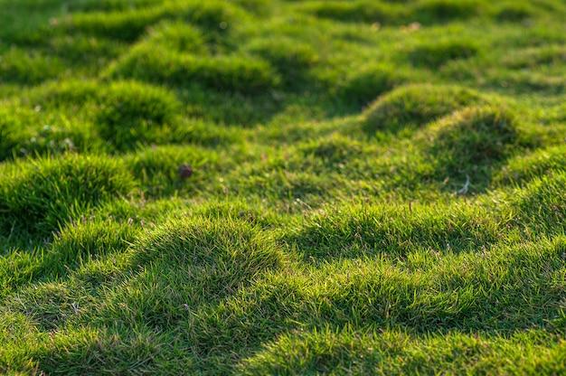 Close-up de grama verde
