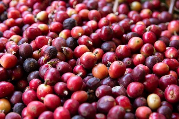 Close-up de grãos de café frescos.