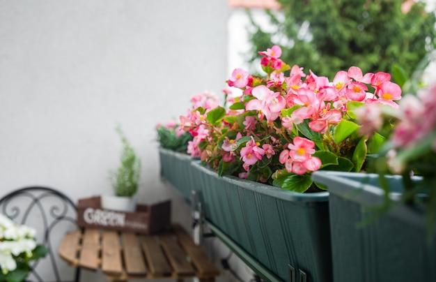 Close-up de lindas flores cor de rosa na varanda