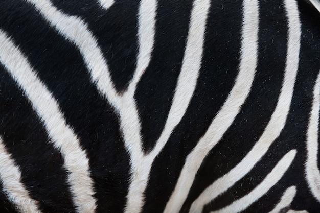 Close-up de listras em pele de zebra