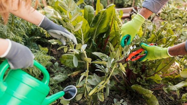 Close-up, de, macho fêmea, aparando, jardineiro, e, aguando, a, planta, jardim