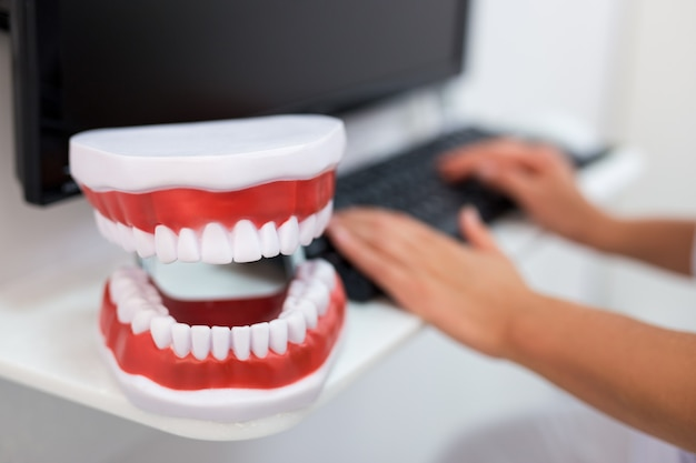 Close-up de mandíbulas artificiais e dentista usando o computador na clínica odontológica
