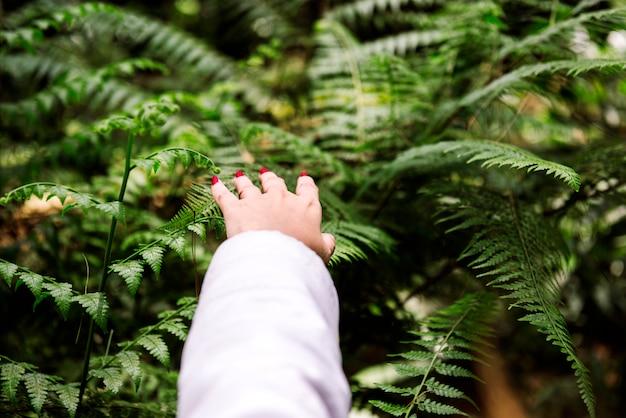 Close-up, de, mão feminina, ligado, floresta verde