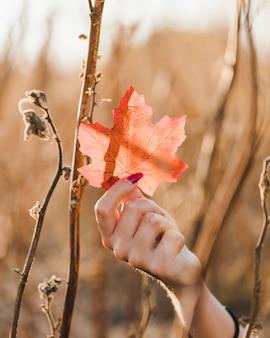 Close-up, de, mão feminina, segurando, folha maple