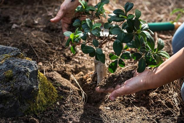 Close-up de mãos plantando uma pequena planta ou árvore na terra
