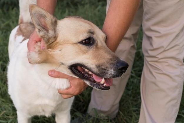 Close-up de mãos segurando um cachorro sorridente