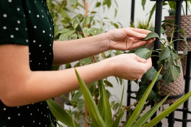 Close-up de mãos verificando folhas